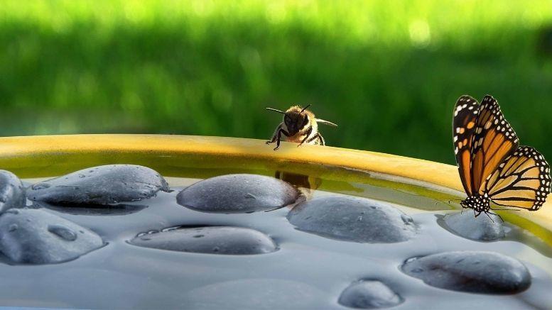 vlinder en bijen bad