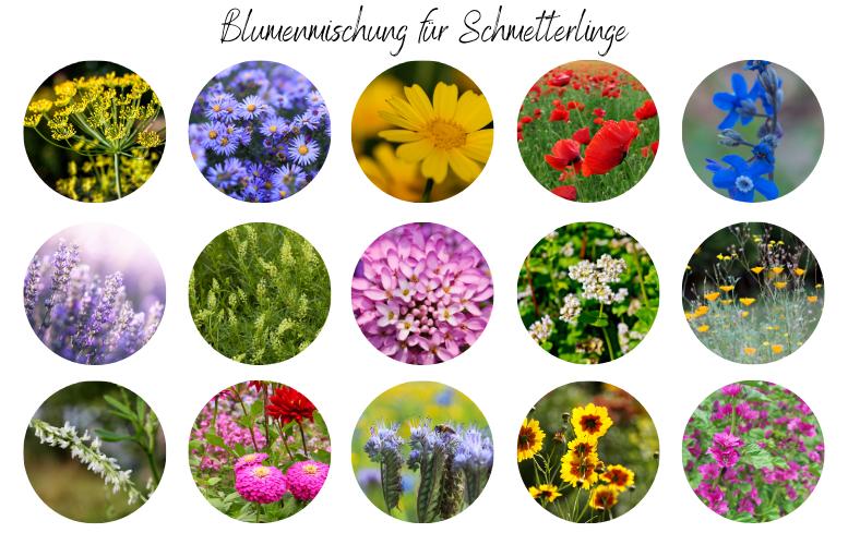 Blumenmischung für Schmetterlinge