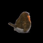 Rotkehlchen L.