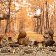 Sitzendes Eichhörnchen L.