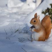 Zittende eekhoorn S