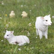 Liegendes Lamm