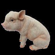 Cochon assis