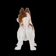 Staande chihuahua