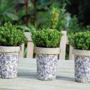 Aged ceramic long tom flower pot