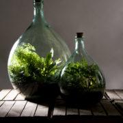 Bouteille terrarium 15 litre, set