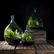 Terrarium bottle 50 litre set