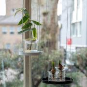 Propagation vase S