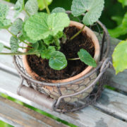 AT pot in wire basket/handle