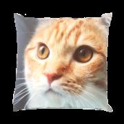 Coussins d'extérieur avec imprimé chat S.
