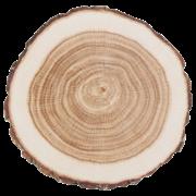 Coasters paper tree trunk set/10