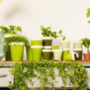 Green long tom flower pot assortment of three