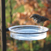Birdstation