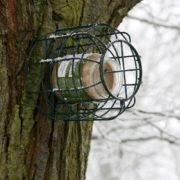 Squirrel proof peanut butter feeder