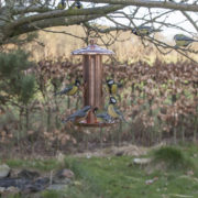 Copperplated  seed feeder