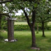 Stainless steel nut feeder