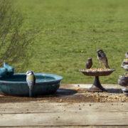 Petrol round bird bath