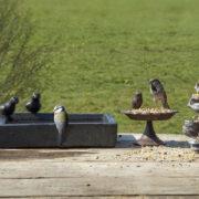 Bain d'oiseaux en terrazzo carré