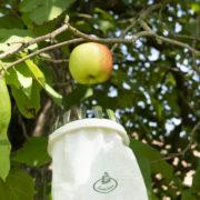 Ramasse-fruits