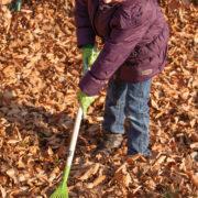 Kinderbladhark groen