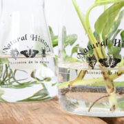 Bekerglas 500 ml