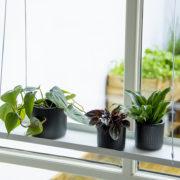 Plateaux pour plantes à suspendre rectangulaires L.