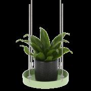 Rond groen plantenplateau S