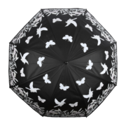 Colour changing Umbrella birds